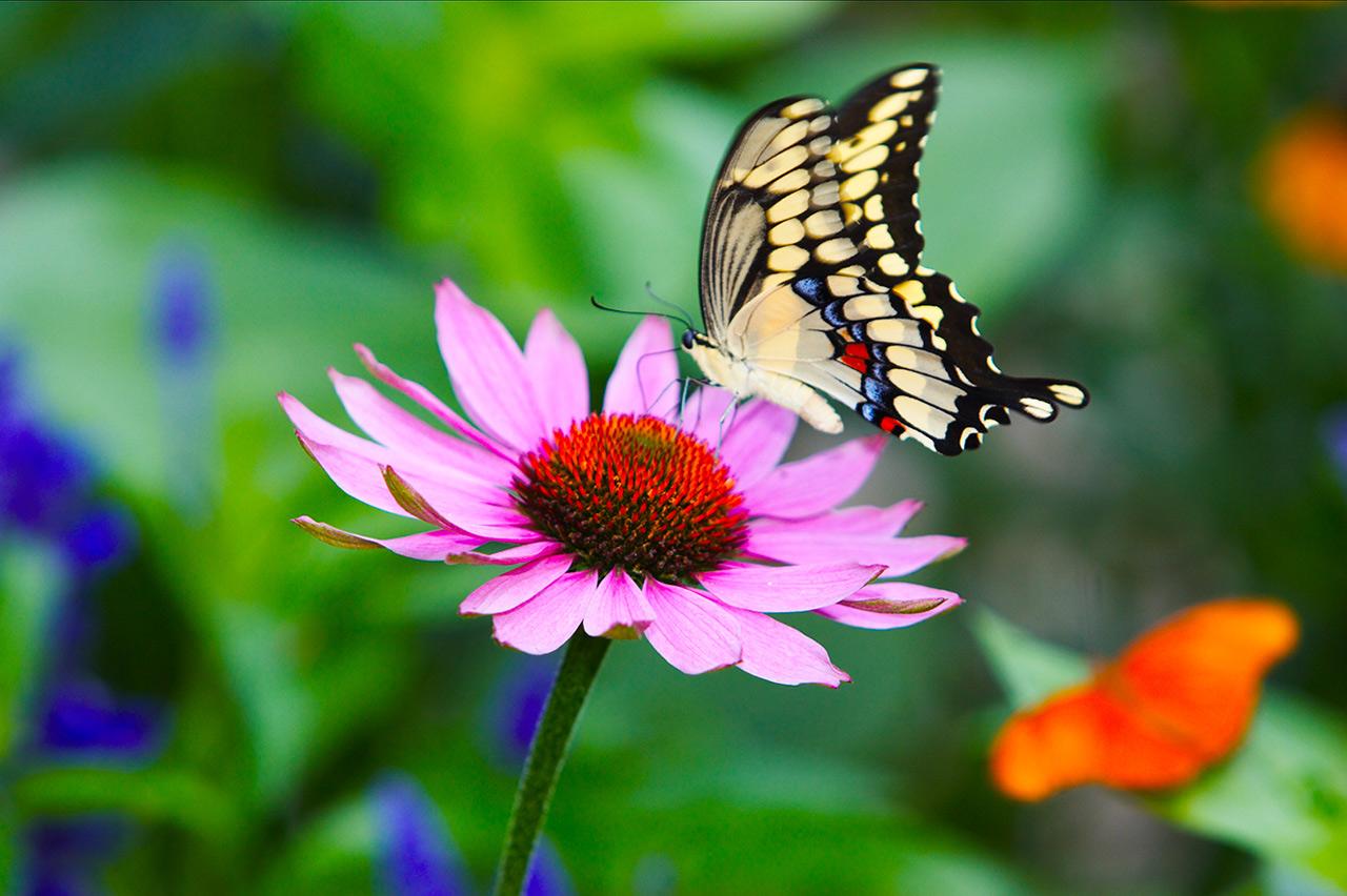 Открытка с летающей бабочкой спб